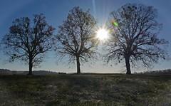 Wintermorgen im Heckengäu (Niwi1) Tags: outdoor natur bäume sonne winter kalt outside nikon niwi1 nature tree morning cold germany
