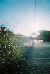 (MrQ1984) Tags: 35mm analogue film fujifilm fujicolor100 summer sunrise sunny light om1 olympusom