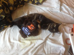 Объятья I (GrusiaKot) Tags: ucraina ukraine україна украина travelling autumn cheburashka pirate cat gatta abbbraccio embrace home
