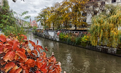 Leaf colors in the fall (marko.erman) Tags: ljubljana ljubljanica river slovenia slovenija banks fall autumn sony colors city cityscape architecture houses historical travel outside extrieur leaf