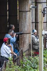 Pandas surveillance (Miles McNamee) Tags: zoo surveillance photoclub panda pandas dczoo
