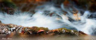 Un torrent tumultueux en automne
