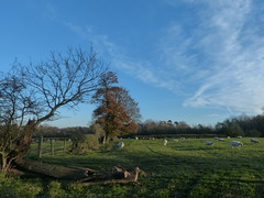 P1450771 (Joy Shakespeare) Tags: coundonwedge brownshillgreen coventry uk landscapes