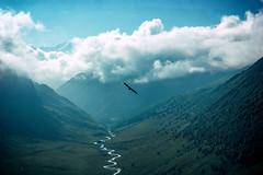 IMG_3819 (Gutenman) Tags: outdoor alpinism alpinist nature tourist bird