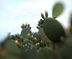 La Palma 32 (megegj)) Tags: gert flower bloem fleur fiore blume