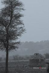Tree_Hut_Web (Bhaumik Trivedi) Tags: bhaumik trivedi bhaumiktrivediphotography wwwbhaumiktrivedicom bhaumiktrivedi canon thol gujarat india hut tree blackandwhite silver zopri