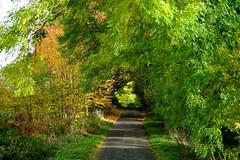 Autumn lane at Clophill (Jayembee69) Tags: beds bedfordshire england uk unitedkingdom clophill kilnlane autumn autumnal tree sun sunlight sunlit colour color lane road countrylane trees