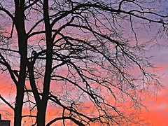 The Tree at Sunset . (Irene, W. Van. BC) Tags: sunset sunsets sunsetskies sunsetclouds sunsetoutlines trees treesilhouettes tree treebranches treesinsunsetskies outdoors outdoor outdoorscenes outlines sky skyline skies redskies allskies wonderfulnature beautifulnature lace laceeffect smallbranches thetreeatsunset