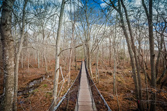 IMG_0760 (Burbank Photography) Tags: canon 6d 17 40 1740l landscape new england cape cod dartmouth frank knowles little river reserve boardwalk marsh