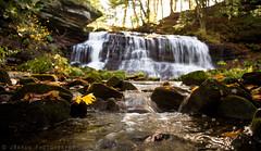 Yellow Leaf at Springfield Falls (James.Baron) Tags: autumn fall springfieldfalls volant mercer waterfall pa pennsylvania nature