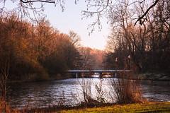 Winter (tribsa2) Tags: nederlandvandaag marculescueugendreamsoflightportal winter amsterdam bos forest foret amsterdamschebos boom bomen arbres trees water ice ijs