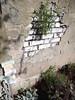 28th August 2015 (themostinept) Tags: plants london wall words poetry hackney stokenewington n16 kynastonavenue mesostic kynastongardens williampattenprimaryschool ministryofstories plantingpoetry