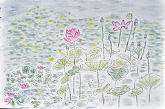 Lotus etang du parc des Gayeulles (GwenFromRennes) Tags: sketch pond lotus rennes etang croquis gayeulles