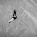 Condor flying over Colca Canyon