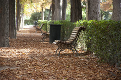 Fall in Madrid