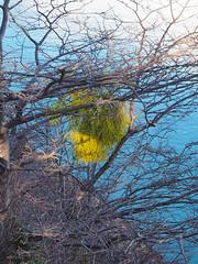 Lichens (Cpt_Love) Tags: argentine argentina voyage decouverte olympuspen penmini pen olympus m43 micro43 μ43 takenbycptlove olympus1250mmf3563 flore fleurs plante plantes epm2 shotbycptlove 2015