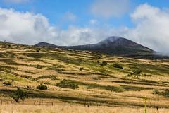 Mauna Kea Trip, Big Island - 10 (www.bazpics.com) Tags: trip usa mountain tree america landscape island volcano hawaii lava drive us big scenery unitedstates cone hill extreme dramatic ash hi volcanoes hillside cones cinder