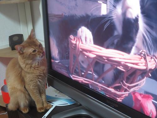 テレビを観ています