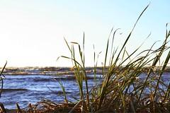 grass (eliinapavlova) Tags: blue sea sky sun beach water grass balticsea baltic latvia sands