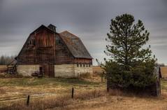 Barnstorming (Len Langevin) Tags: old abandoned barb farm building alberta canada derelict rural decay cremona nikon d300 nikkor 18300 sundrearea