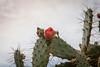 "Jardin exotique de Monaco (Bru42) Tags: cactus garden de jardin delicious exotic jardim tuin » exótico garten giardino в jardín suculentas kaktus exotique succulentplants сад succulentes jardinexotique exoticgarden esotico heerlijke giardinoesotico exotischergarten plantesgrasses exotische кактус exotischer саду herrliche экзотический succulento восхитительный заводы plantascarnosas jardínexótico fettpflanzen piantegrasso succulentplanten exotiquejardintuincáctusplantassuculentas deliciosasjardimexótico «сочные 仙人掌的美味多汁的""植物""的异国情调的花园花园 サボテン気持が良い「みずみずしい植物」外来種庭庭園"