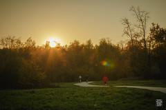 2015-11-01_Q8B3997  Sylvain Collet.jpg (sylvain.collet) Tags: autumn france nature automne sur marne vairessurmarne vaires