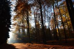 DSC_8567 Herbstfarben in Licht und Schatten - Autumn colors in light and shade (baerli08ww) Tags: autumn light mist fall forest germany deutschland licht nikon herbst natur autumncolors shade wald schatten rheinlandpfalz westerwald herbstfarben rhinelandpalatinate westerforest
