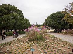 P1580639.jpg (Rambalac) Tags: flowers plant water japan pond asia вода пруд цветы fukuokaken япония растение fukuokashi азия lumixgh4