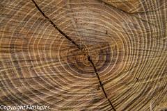 grain (julie trueman) Tags: wood tree cut grain