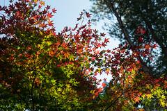 TOKUSHIMA DAYS - Kamiyama forest park (junog007) Tags: park autumn tree forest nikon outdoor forestpark autumnalleaves d800 2470mm nanocrystalcoat