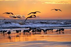 Algarve (Zza Lemos) Tags: algarve gua aves areia reflexos mar portugal vilamoura sunset puestadelsol pordesol gaivotas water natur natureza praia