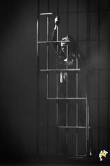 Ela Bailarina (Marcelo Seixas) Tags: mulher linda maravilha dancing cabaret beautiful lovely cady action dance ballerina art arte jazz clssicos broadway class performace poise balerina balance artistic woman star show apresentao boavista boa roraima espetculo ballet moderno balletmoderno performances students aluna ballo bal bailariana bailarino ballerino palco light perfect perfeito perfeio musculos muscles young jovem dana danze danza tanz tones tons surreal wow canon girl love people photo photography ciajmjazz profissional professional balet baletka baletki baletky balletslippers ballerinas balett