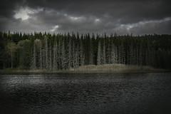 I miss the sun.. (anek07) Tags: autumn clouds cold water deadforrest october lake landscape landskap lines pinetree pinewood pine vrmland vatten hst sweden sverige tidafors rten grass