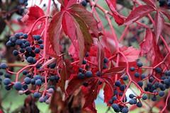IMG_7157 (nicole.schmidtova) Tags: photography czechrepublic canon canon60d czech countryside nature simply autumn fall