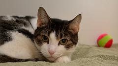 Joy-DSC_0061 (Ali Crehan) Tags: shelter cat september 2016