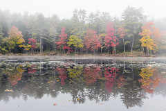Tully Lake Foliage (tkolos) Tags: foliage massachusetts ma fall autumn color colors lake tully tullytrail tullylake seasons fog reflection water photography newengland