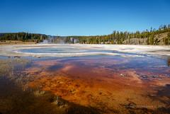 Old Faithful Geyser Basin, Yellowstone National Park. (scepdoll) Tags: yellowstonenationalpark wyoming montana geysers norris oldfaithful cyanobacteria bluegreenalgae oxbowbend grandtetonnationalpark