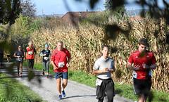 Hallwilerseelauf: Noch fuenf Kilometer, dann ist der Halbmarathon geschafft