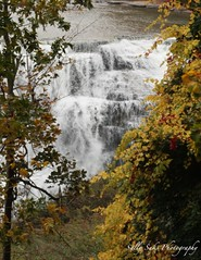 IMG_9533 (Sally Knox Sakshaug) Tags: letchworth state park new york fall autumn october colors leaf leaves orange yellow stone grey gray brown green red beautiful pretty scenic gorge ravine cliff wall edge side river water valley deep crevice waterfall white spectacular falls beauty middle large major mighty strong powerful impressive awe inspiring genesee portagecanyon closeup