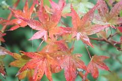 Rainy Fall (BMonahan2018) Tags: second rain filltheframe orange yellow fall water green ruleofthirds rule thirds fill frame rainy winter pumpkins