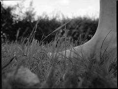 (Christian Güttner) Tags: zenzabronica etrs ecodeveloper moerschecodeveloper monochrome mediumformat mittelformat czarnobiale 120 645 6x45 gras grass analog analogue ilford ilfordhp5 film rollfilm umwelt outdoor schwarzweis svartvitt schwarzweisfotografie sw bokeh bokhe natur nature niebo schärfentiefe