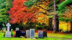 Why Do Leaves Change Color in the Fall? (S Munir Photography) Tags: why do leaves change color fall ngc photography scotland landscapephotography canonphotographers outdoors love colours colorful