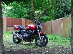 My CB trying hard to be an #offroader whilst dreaming of being a #caferacer 😂😂 1993 CB400 SuperFour - Project Big 1 💨 (Shankojam) Tags: shankojam naked nakedbike caferacerdreams iphonephoto iphonephotography iphone trees garden motorcycle redandblack redbike 3spoke treeframed givi online nc31 japanese backyard 2wheels gardenfurniture gardenart 400cc greyimport hondabike honda motorbike super4 cb400sf projectbig1 superfour cb400 instagramapp square squareformat iphoneography