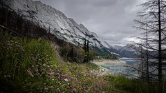 Medicine lake valley (drhmphotography) Tags: mountains lakes forests trees summer canada alberta valleys