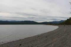 The hardy one ... goes swimming (demeeschter) Tags: canada yukon territory highway landscape scenery lake mountains road forest nature teslin town