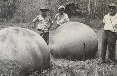 #Indigenous stone balls found at Palmar, Puntarenas, Costa Rica, 1960 [900x585] #history #retro #vintage #dh #HistoryPorn http://ift.tt/2h27HXC (Histolines) Tags: histolines history timeline retro vinatage indigenous stone balls found palmar puntarenas costa rica 1960 900x585 vintage dh historyporn httpifttt2h27hxc