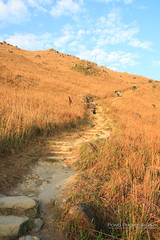 IMG_1942 copy (PONG Photography P.P) Tags: hongkong nature landscape autumn