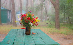 Field bouquet (kud4ipad) Tags: 2016 prokhorovka morning bouquet flower table outdoors fog forest platinumheartaward greatphotographers