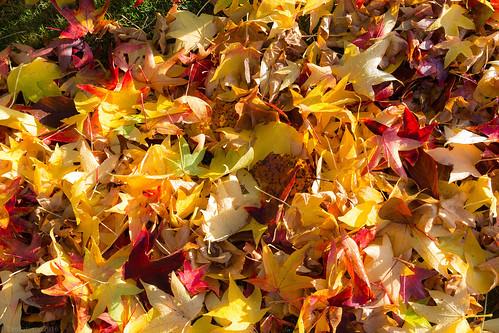 November leaf litter.