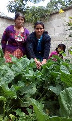 2016 Dora in garden (Foods Resource Bank) Tags: foods resource bank food security income humanitarian guatemala indigenous women agriculture children greenhouses small business